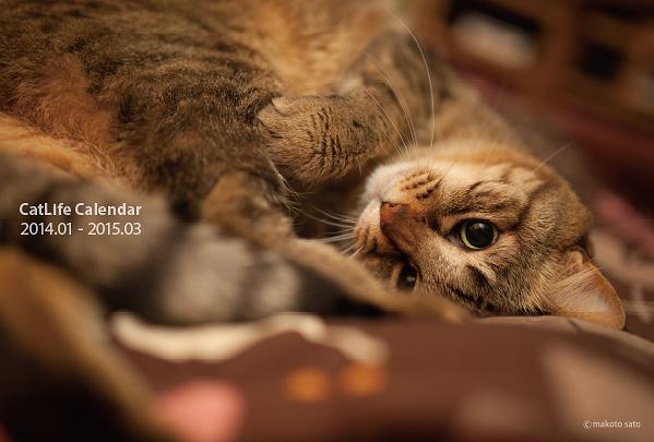2014年版CatLifeカレンダー販売中です