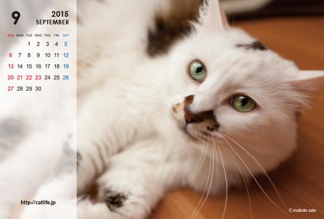 2015年版CatLife卓上カレンダー販売開始
