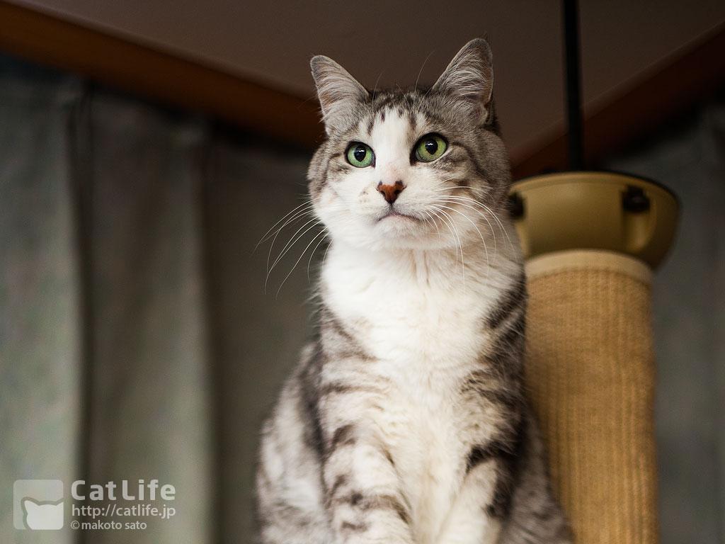 CatLife猫壁紙2015年3月、4月をアップしました