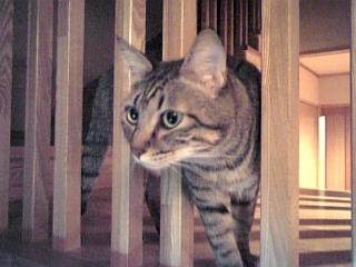 image/catlife-2005-10-13T18:39:09-1.jpg