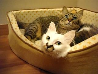 image/catlife-2005-10-20T01:23:27-1.jpg