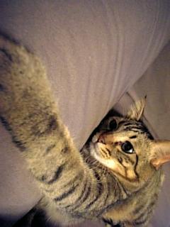 image/catlife-2005-10-27T23:32:16-1.jpg