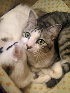 image/catlife-2005-11-15T16:39:00-1.jpg