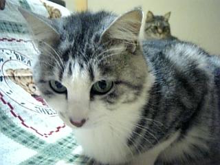 image/catlife-2006-02-01T23:27:33-1.jpg