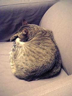 image/catlife-2006-02-19T23:17:10-1.jpg