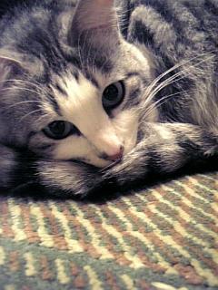 image/catlife-2006-02-19T23:55:45-1.jpg
