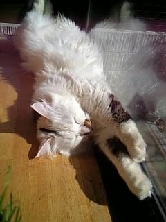 image/catlife-2006-03-15T09:52:56-1.jpg