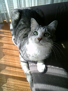 image/catlife-2006-03-15T10:01:00-1.jpg
