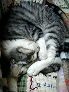 image/catlife-2006-03-16T02:03:32-1.jpg