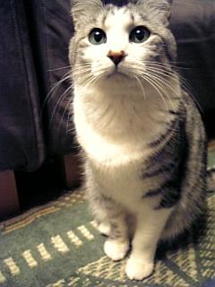 image/catlife-2006-03-28T21:18:49-1.jpg