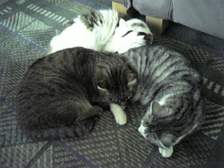 image/catlife-2006-04-02T14:20:13-1.jpg