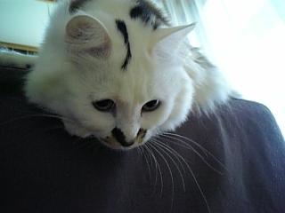 image/catlife-2006-04-11T08:11:32-1.jpg
