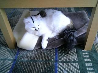 image/catlife-2006-04-13T10:29:37-1.jpg