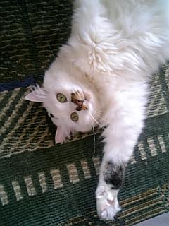 image/catlife-2006-04-14T08:45:05-1.jpg