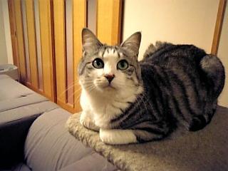 image/catlife-2006-04-14T19:30:07-1.jpg