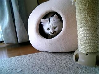 image/catlife-2006-04-15T13:35:26-1.jpg