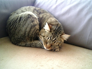 image/catlife-2006-04-17T15:16:57-1.jpg