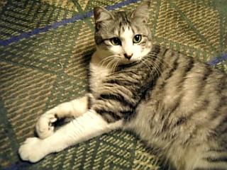 image/catlife-2006-04-17T22:03:58-1.jpg
