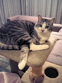 image/catlife-2006-04-18T21:39:47-1.jpg