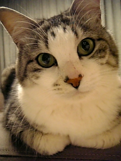 image/catlife-2006-04-18T21:56:52-1.jpg