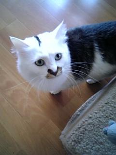 image/catlife-2006-04-19T09:08:44-1.jpg