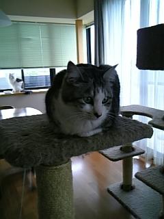 image/catlife-2006-04-19T09:10:58-1.jpg