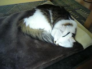 image/catlife-2006-04-19T15:29:59-1.jpg