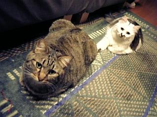 image/catlife-2006-04-19T23:15:30-1.jpg