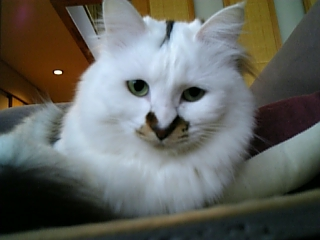 image/catlife-2006-04-20T10:03:32-1.jpg