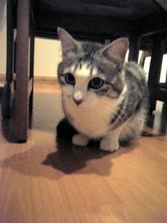 image/catlife-2006-04-20T19:55:46-1.jpg