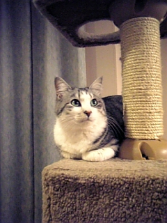 image/catlife-2006-04-20T21:05:08-1.jpg