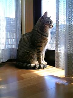 image/catlife-2006-04-21T13:03:12-1.jpg