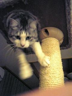 image/catlife-2006-04-22T19:45:11-1.jpg