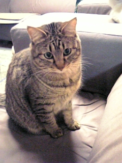 image/catlife-2006-04-24T00:22:24-1.jpg