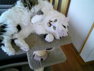 image/catlife-2006-04-24T09:41:20-1.jpg