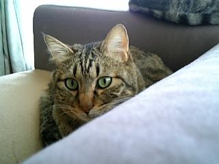 image/catlife-2006-04-25T14:03:20-1.jpg