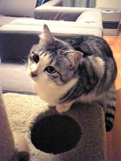 image/catlife-2006-04-25T23:47:24-1.jpg